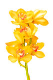 Flower Orchid close up isolated on white background Stock Photos