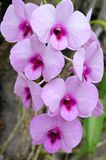 Flower , orchid close up in nature Stock Image