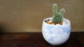 Flower orchid decor in garden. Design art outdoor wood foor wallpaper Royalty Free Stock Photo