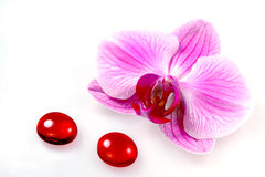 Flower orchid and glass stones Royalty Free Stock Photography