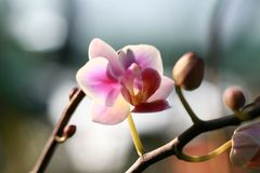 Flower orchid macro. Under the sun Stock Image