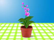 Flower. Orchid flower in a flower pot on the table Royalty Free Stock Photo