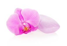 Flower of an orchid and soap Stock Photography