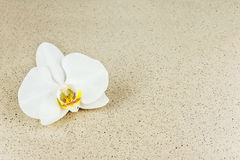 Flower of orchid with splashes of water on beige background. Royalty Free Stock Photography
