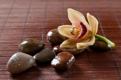 Flower orchid and zen stones Stock Photo
