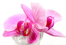 Flower orchids Royalty Free Stock Photo