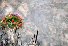 Flower and ornamental millet with concrete wall Royalty Free Stock Image