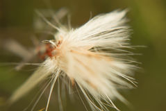 Flower out of focus royalty free stock photography
