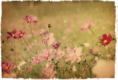 Flower paper royalty free stock images