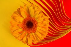 Flower on paper. Red and yellow Royalty Free Stock Images