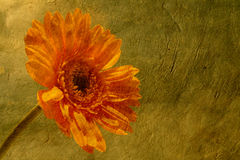 Flower on paper. A flower on a grungy background Royalty Free Stock Photos