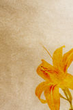Flower paper textures. Stock Image