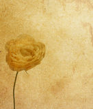 Flower paper textures. Royalty Free Stock Photography