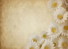 Flower parchment Royalty Free Stock Image