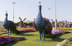 Flower Park in Dubai (Dubai Miracle Garden). United Arab Emirates. Royalty Free Stock Images