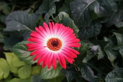 This is a flower in the park stock photography