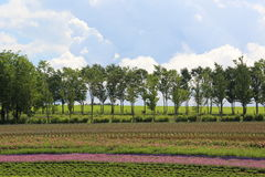 Flower park in plateau Royalty Free Stock Photography