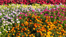 Flower Parterre Stock Images