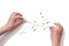 Flower patern on a white background. Cut flower  on white background Royalty Free Stock Photo