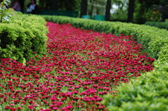 Flower path Stock Images