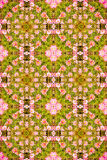 Flower patten background Royalty Free Stock Photo