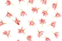 Flower pattern background. royalty free stock images