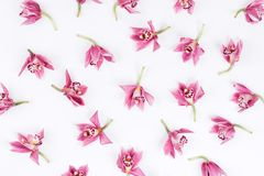 Flower pattern background. stock images