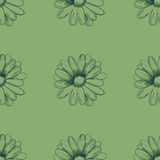 Flower pattern. Camomile drawing on a green background. Vector Stock Photography