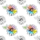 Flower pattern. Drawing of a color camomile. Vector Stock Image