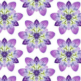 Flower Pattern F. Unique geometric flower with dewdrops pattern Royalty Free Stock Photo