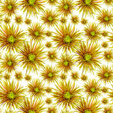 Flower pattern  green orange chrysanthemum Royalty Free Stock Photography