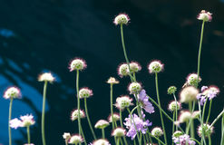 Flower Pattern Stems Royalty Free Stock Photography