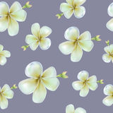 Flower pattern. This is vector file Royalty Free Stock Image