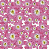 Flower pattern Royalty Free Stock Images
