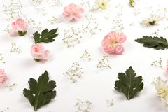 Flower pattern on the white background stock photo