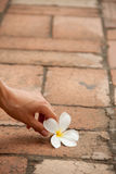 Flower on the pavement with hand Stock Images
