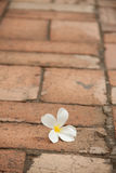Flower on the pavement Royalty Free Stock Images