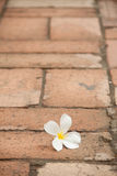 Flower on the pavement Stock Photo