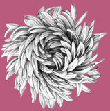 Flower. Pencil Drawing. Stock Image