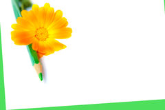 Flower with a pencil Royalty Free Stock Image