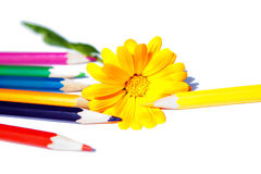 Flower with pencils Royalty Free Stock Photos