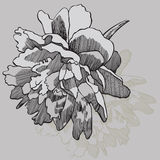 Flower peony, hand-drawing. Vector illustration. Royalty Free Stock Images