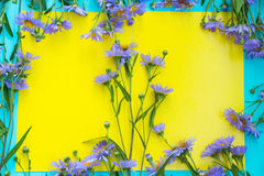 Flower of perennial violet aster on yellow background. Floral fr Royalty Free Stock Image