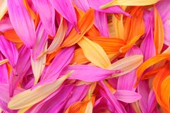 Flower petal Stock Images