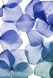 Flower petal close up Royalty Free Stock Photos