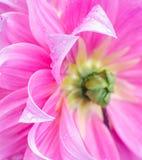 Flower petal. Stock Photography