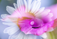 Flower petal with drop Royalty Free Stock Images