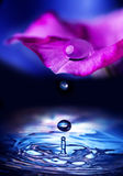Flower petal with drop Stock Image