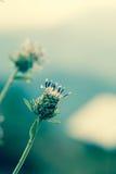 Flower after petal fallen Stock Photography