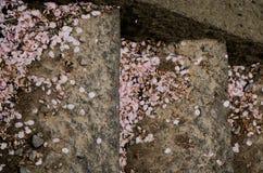 Flower petal falling on stair Royalty Free Stock Photos